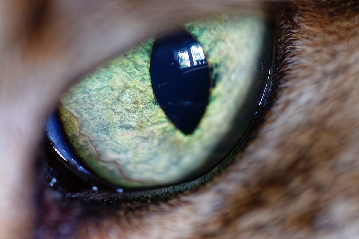 blur-cat-eye-close-up-view-1051229-1200x800.jpg