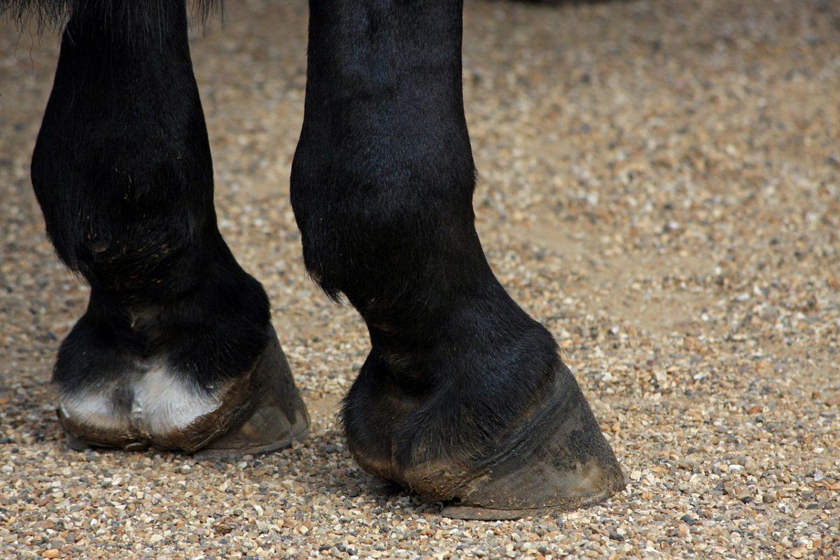 horses-hooves-164940_1280-1200x800.jpg