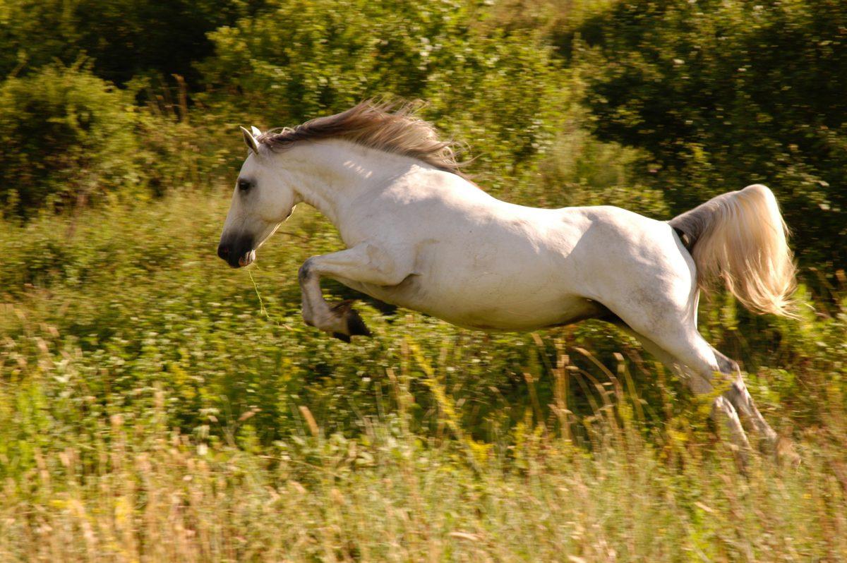 animal-cavalry-equestrian-629139-1200x798.jpg