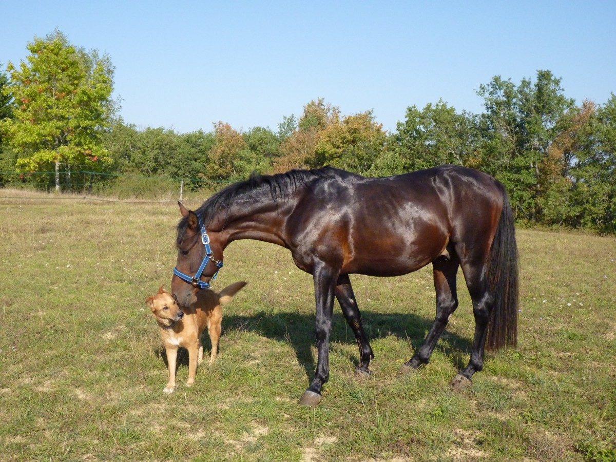 horse_pure_arab_blood_horse_breeding_equine_horses_pre_standard_horseback_riding-474101.jpgd_-1200x900.jpg