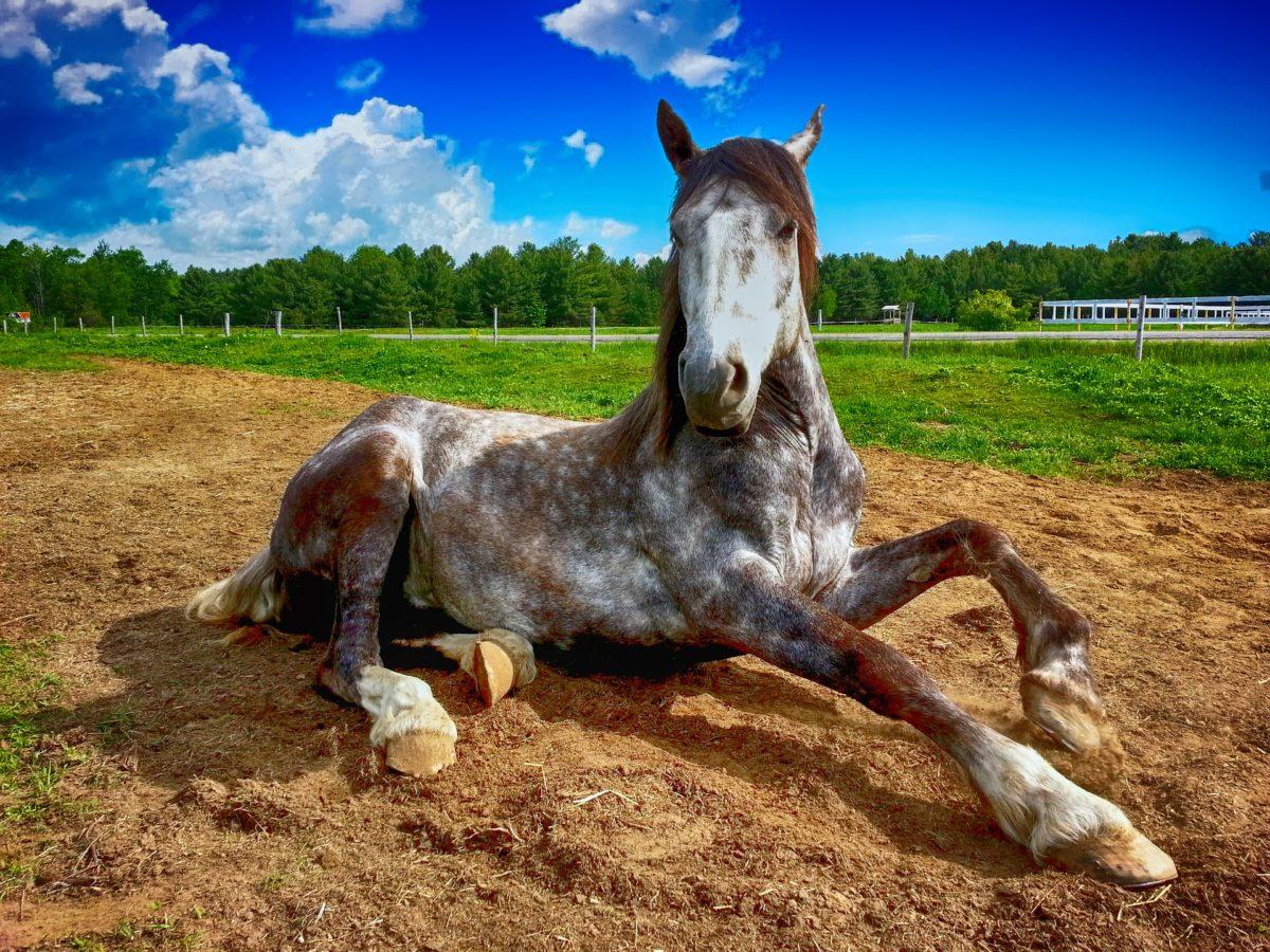 horse-2572051_1920-1200x900.jpg