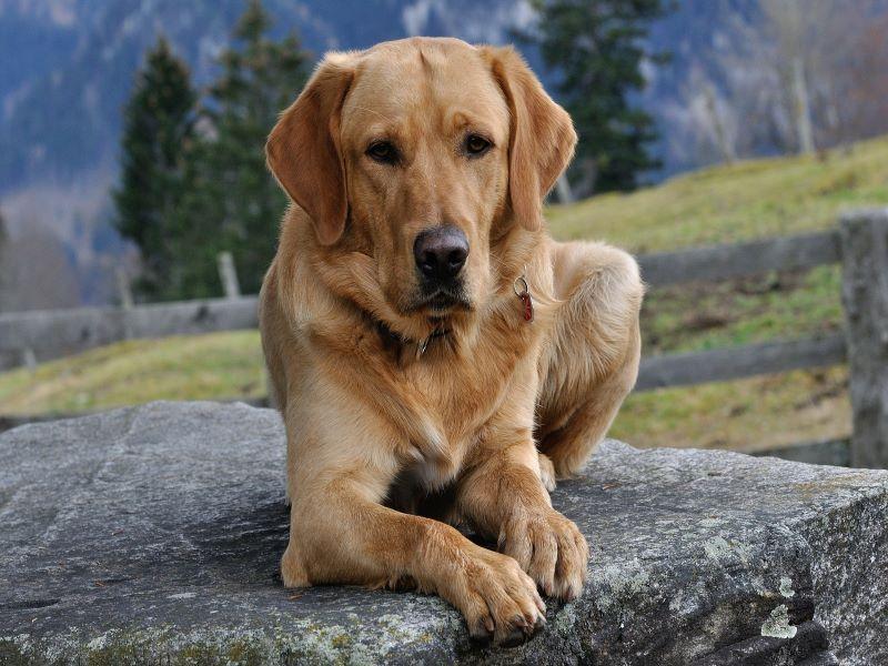 dog-548611_1920-0021.jpg