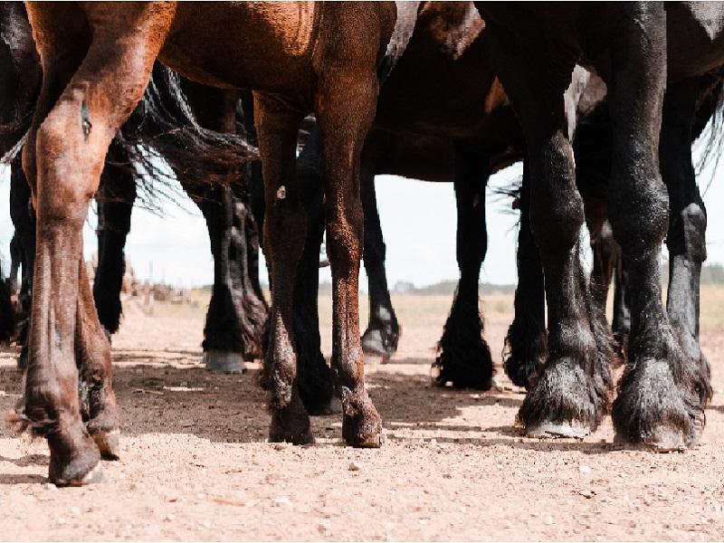 legs-brown-black-horses.jpg
