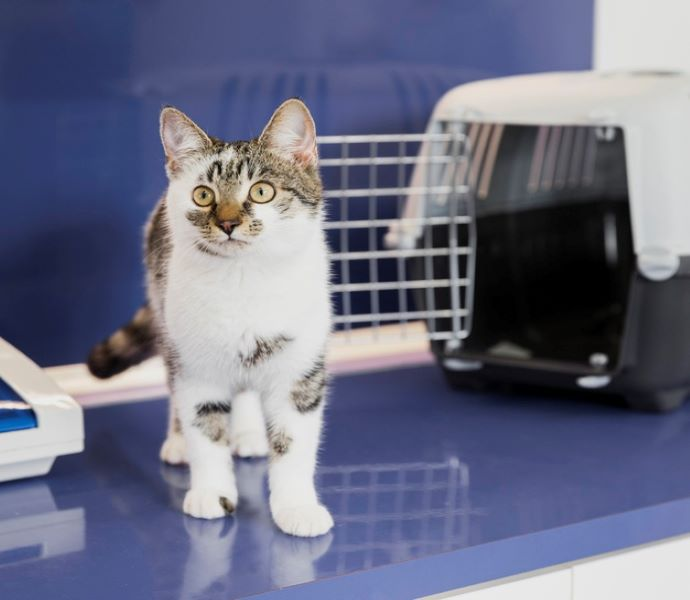 2beautiful-cat-with-cage-veterinary-clinic_23-2148302245.jpg