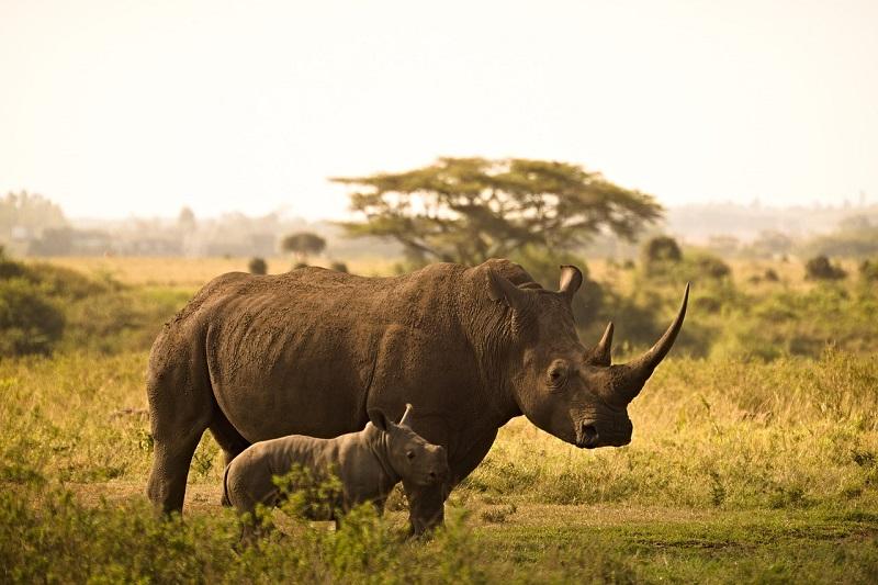 rhino-6065480_1280.jpg
